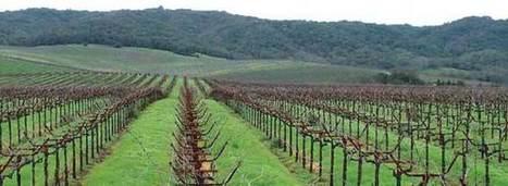 Wine Giants Monopolize U.S. Market | Wine News & Features | Grande Passione | Scoop.it