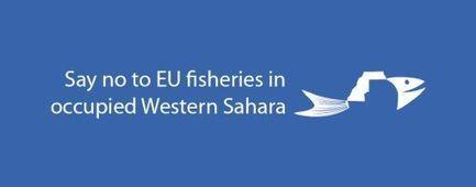 Stop the EU fisheries in Western Sahara! - fishelsewhere.eu | Le Sahara | Scoop.it