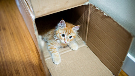 Why do #cats love #boxes so much? | EARTHCOVE - a place for peaceful interplanetary & interspecies relations | Scoop.it