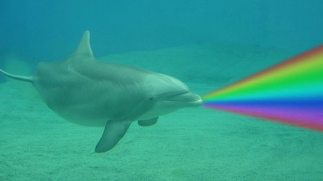 Scientists beam light in front of dolphins and accidentally creating 'rainbow lasers' | Amazing Science | Scoop.it
