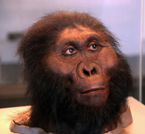 The Top Seven Human Evolution Discoveries From Tanzania | Paleoanthropology news | Scoop.it