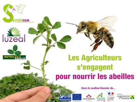 Des bandes de luzerne pour nourrir les abeilles | Agriculture durable et protection des cultures | Scoop.it