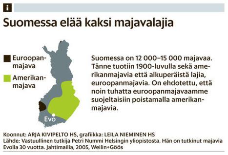 Majava panee töpinäksi | Biologygeography teaching | Scoop.it