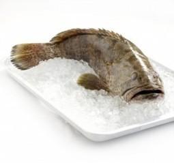 El verbo ser es un pescado | Aprender y educar | Scoop.it