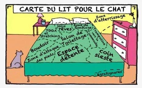 Carte du lit pour le chat | Histoire de chats | Scoop.it