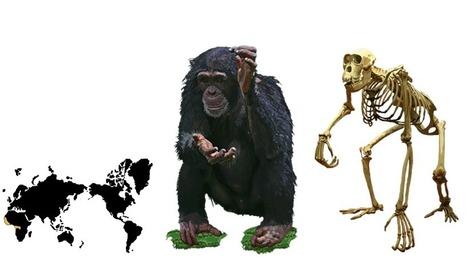 eSkeletons | eSkeletons | Science | Scoop.it