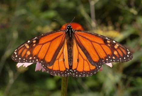 Día de la Tierra: por qué hay que proteger la 'pequeña' biodiversidad | Nuevas Geografías | Scoop.it