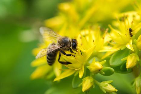 Comprendre le projet de loi sur la biodiversité   RSEco-systémique   Scoop.it