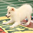 Furry Alternative to the Super Bowl | Dog Training - Mark Mendoza | Scoop.it