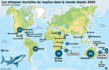 Les captures de requins de la Réunion sont suspendues | Protection des Océans | Scoop.it