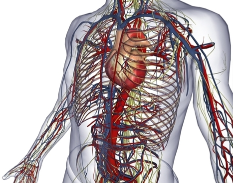 BioDigital: 3D Human Visualization Platform for Anatomy and Disease | Salud Publica | Scoop.it