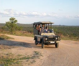 3 day budget Kruger National Park safari, South Africa | Kruger & African Wildlife | Scoop.it