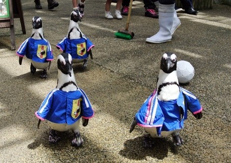 WorldViews: What does Singapore have against gay penguins? | The Washington Post | Kiosque du monde : Asie | Scoop.it