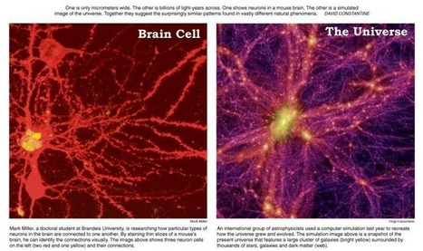 How the universe grows like a Giant Brain | Soup for thought | Scoop.it