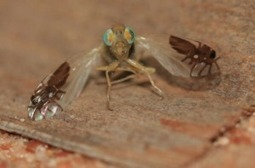 Confrontation From A Fruit Fly's Perspective - Advanced Vectors | Mediocre Me | Scoop.it