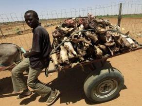 Les présidents du Soudan et de Centrafrique veulent sécuriser leur frontière | Actualités Afrique de l'Ouest & Centrale | West & Central Africa news | Scoop.it