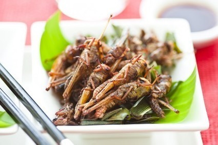 The Cricket and the Cow // Pint of Science Australia | Entomophagy: Edible Insects and the Future of Food | Scoop.it