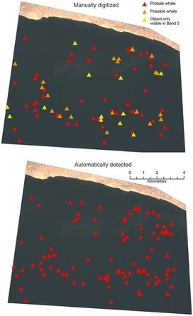 Whales from Space: Counting Southern Right Whales by Satellite | Remote Sensing News | Scoop.it