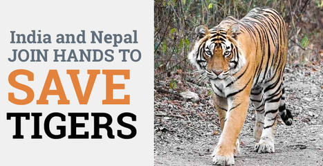 India and Nepal Join Hands to Save Tigers: Tour My India | India Travel & Tourism | Scoop.it