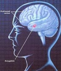 Definición de Psicopatología | Psicopatología | Scoop.it
