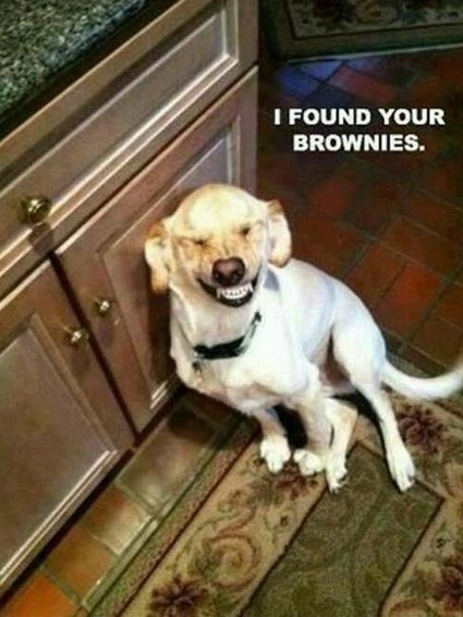 The Special Happy Brownies - LOL Funny Videos & Pictures | LOL Funny Videos Pictures | Scoop.it