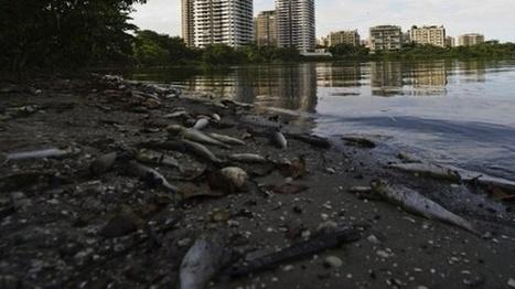 Brazil pledges to clean up decades of pollution for Olympics   The Raw Story   L'actu du droit de l'environnement !   Scoop.it