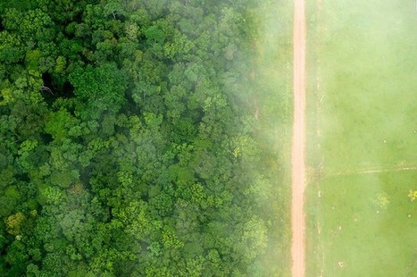 Quantifying the drivers of South American deforestation | Rainforest EXPLORER:  News & Notes | Scoop.it