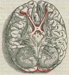 Study Reveals that Movement Kicks Visual System into Higher Gear | Social Neuroscience Advances | Scoop.it