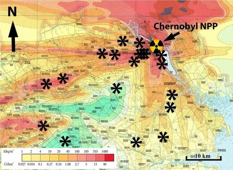 Radiation damage at the root of Chernobyl's ecosystems | Sustain Our Earth | Scoop.it