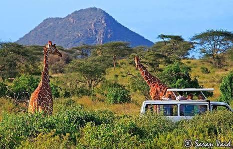 How to plan a wonderful Africa Safari Tour? :: african safari   Safaris in India & Africa   Scoop.it
