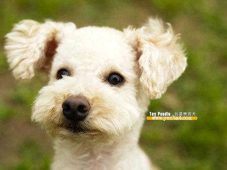 10 อันดับสุนัขที่ฉลาดที่สุดในโลก | JR PLOY | Scoop.it