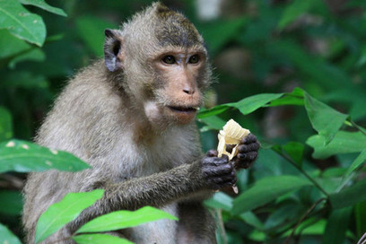 Omega-3 rich diet linked to more developed brain networks: Monkey data | Longevity science | Scoop.it