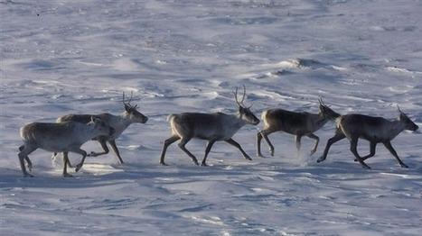Après l'Afrique, Areva s'en prend aux Inuit : je dis NON !   Une seule Terre pour tous - Only one Earth for all   Scoop.it