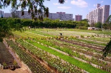Farm Gate: Urban Farmers | Vertical Farm - Food Factory | Scoop.it