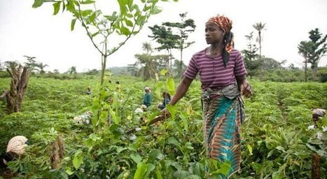 FAO publica la guía sobre capacitación de género y cambio climático | cambio climático | Scoop.it