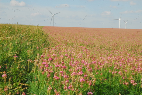 Le sainfoin entre tradition et modernité | L'agriculture auboise et champardennaise | Scoop.it