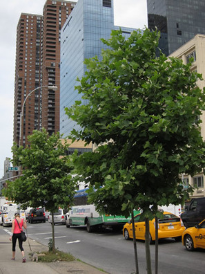 Study Evaluates Costs of Reducing Carbon with Street Trees | Tree Preservation Planning | Scoop.it