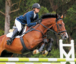 Proximal suspensory desmopathy in horses - DVM | all things horsey | Scoop.it