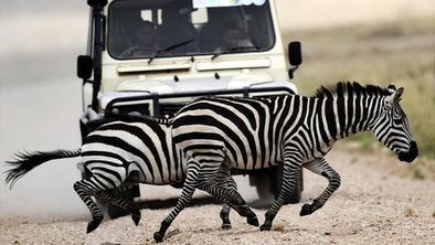 Worries over new roads in Tanzania's Serengeti | geography | Scoop.it