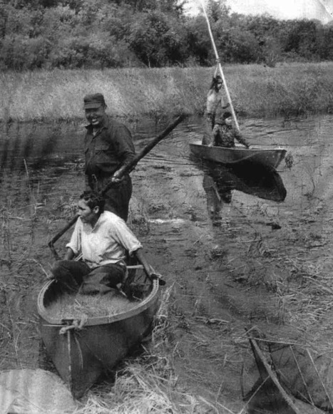 History of Wild Rice | Farming, Forests, Water & Fishing (No Petroleum Added) | Scoop.it