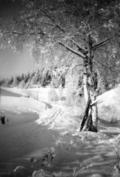 Ole Husby - Google+ - Mitt private bildeprosjekt - det går litt tregt... hjelp søkes! | Skolebibliotek | Scoop.it