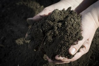 Antidepressant Microbes In Soil: How Dirt Makes You Happy | Vintage Living Today For A Future Tomorrow | Scoop.it