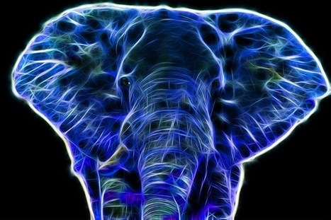 Ecologist Develops Elephant-inspired Hearing Aid | Biomimicry | Scoop.it