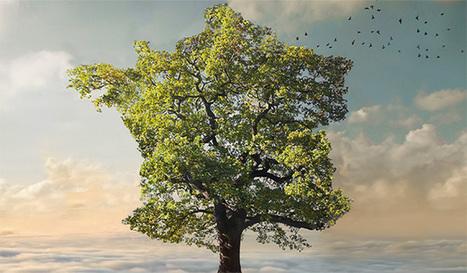 Le Palmarès 2013 de l'écologie en France | territoire et développement durable | Scoop.it