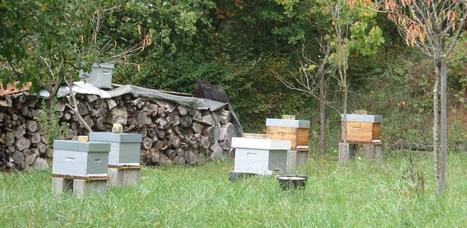 Apiculture : Une récolte de miel «catastrophique» - La France Agricole | Agriculture et Alimentation méditerranéenne durable | Scoop.it