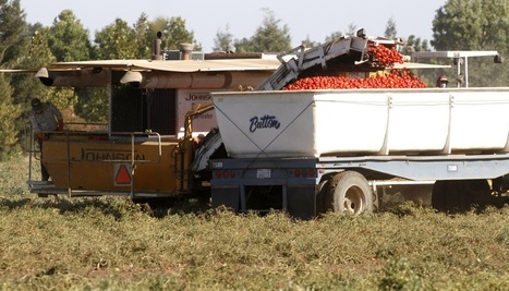The Tomato Harvester | Boom: A Journal of California | Peer2Politics | Scoop.it