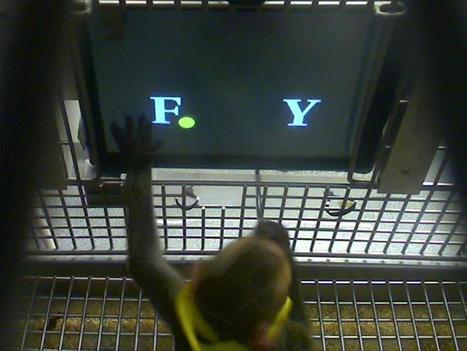 Easy As Pi! Monkeys Can Do Math - NBCNews.com | 21st Century Concepts Math | Scoop.it