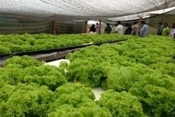 – Hidroponia en el desierto chileno | Cultivos Hidropónicos | Scoop.it