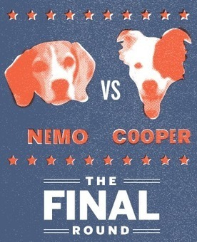 Survival of the Cutest: While Nemo and Cooper Battle for the Crown, 30 Other Dog Owners Are Disappointed. Some of Them Extremely So. | FrontBurner | Hunger Games in the Library (and other classrooms) | Scoop.it