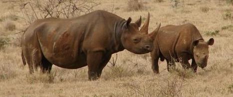 "Irina Tikhomirova on Twitter: ""Poaching Crisis Continues: More Than 730 Rhinos Killed In South Africa So Far This Yr 